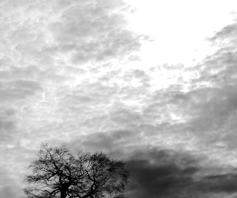Sous un ciel très nuageux, le soleil fait une percée. Au sol, la silhouette hivernale d'un arbre