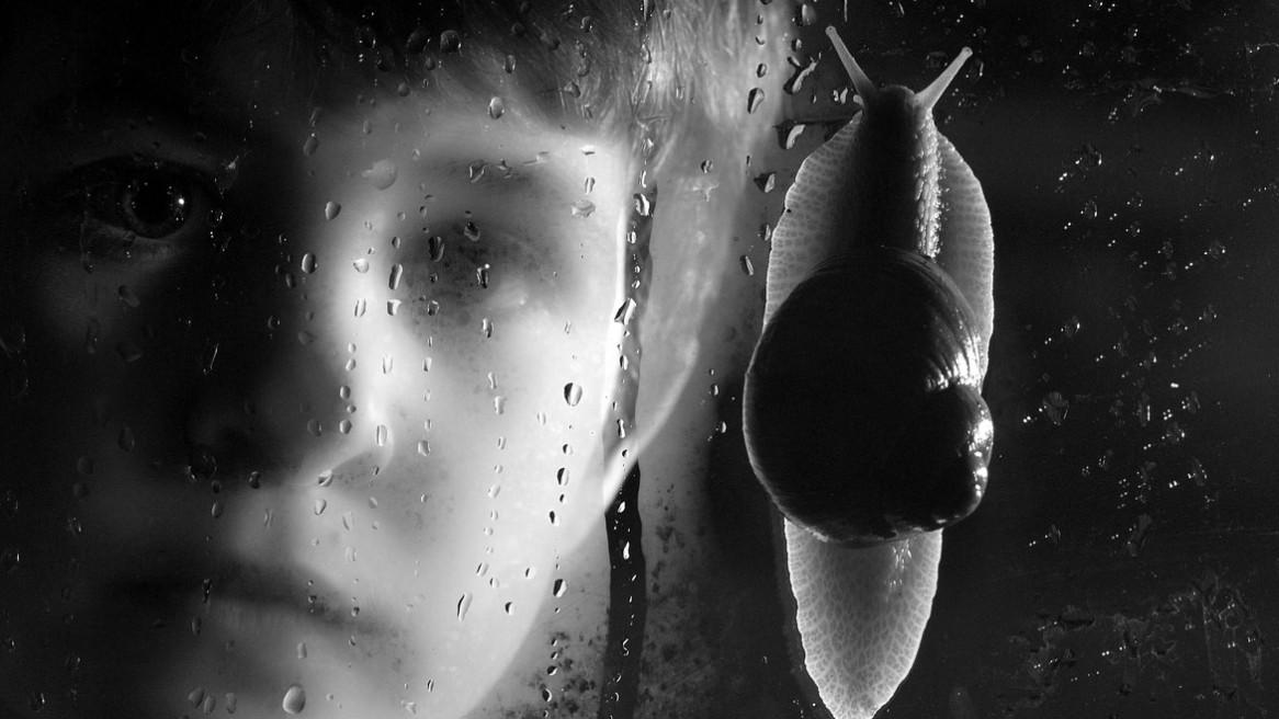 Un escargot escalade la vitre devant le regard d'un jeune garçon. Photo de Matthieu Dupont