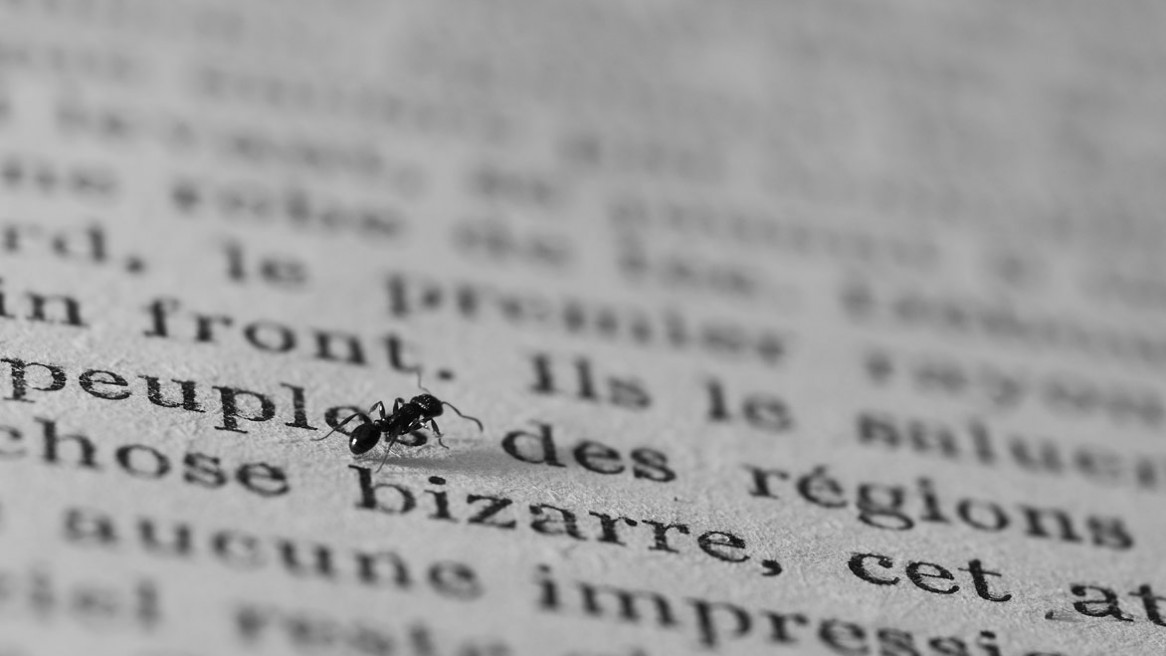 Une fourmi se promène sur les pages d'un livre, au milieu des mots et des lettres.