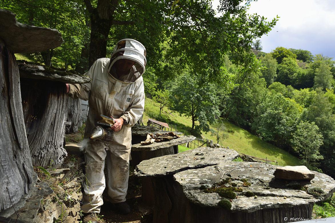 apiculteur-ruche-ardeche-matthieu-dupont
