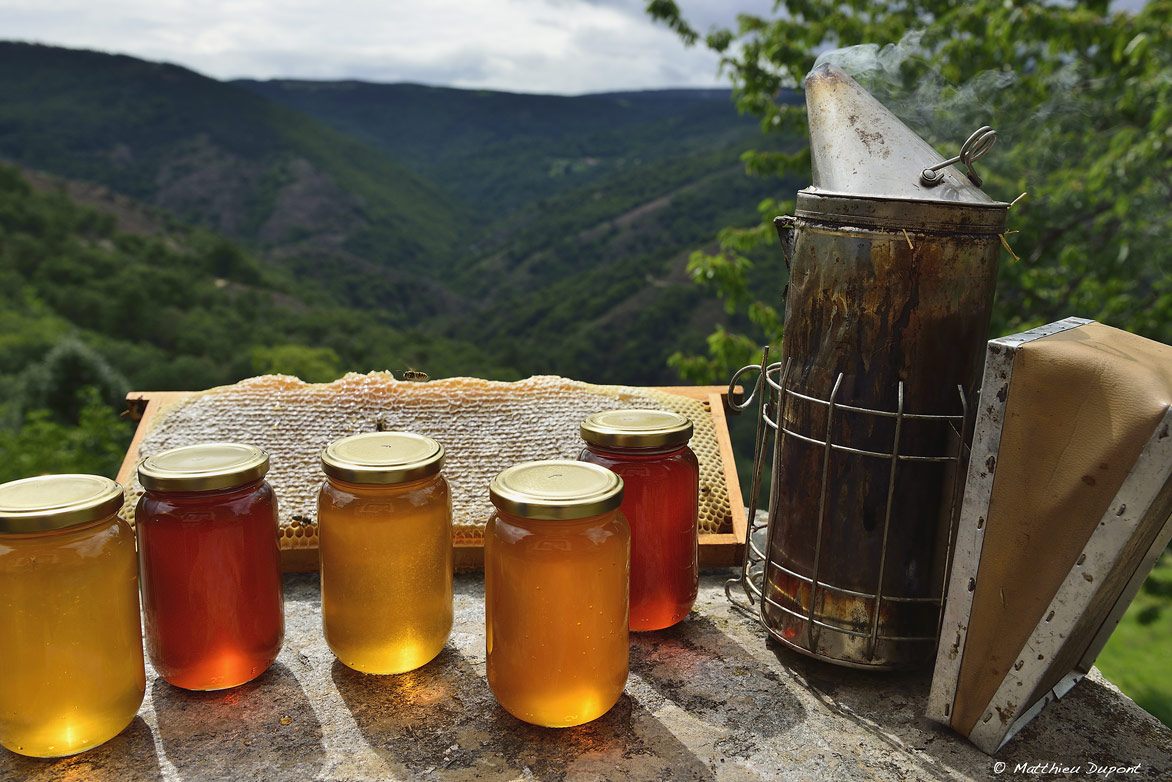 miel-apiculture-ardeche-matthieu-dupont