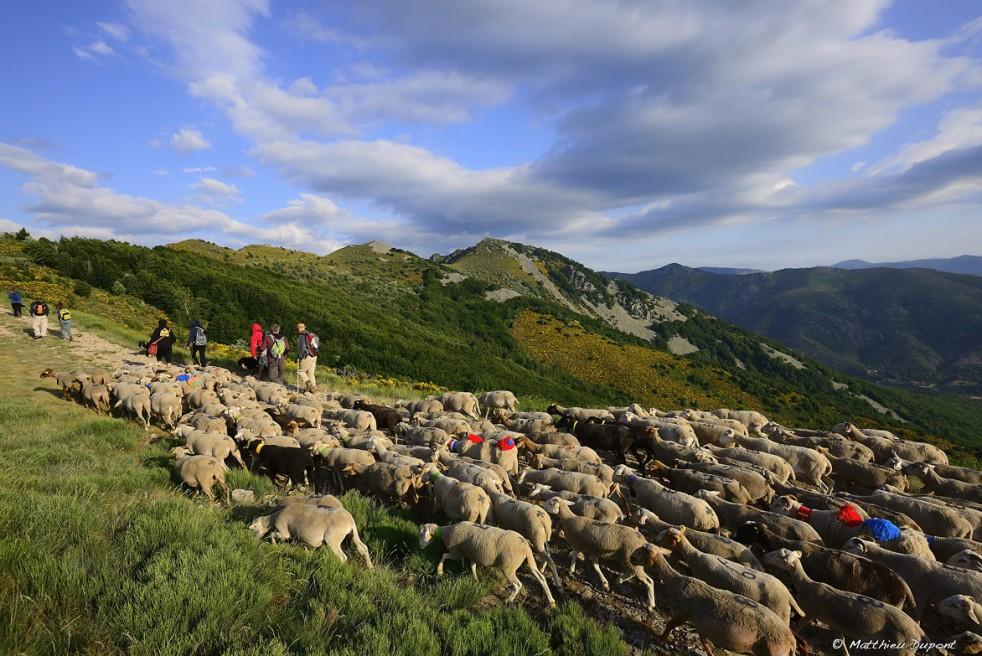 Agriculture en Montagne ardéchoise